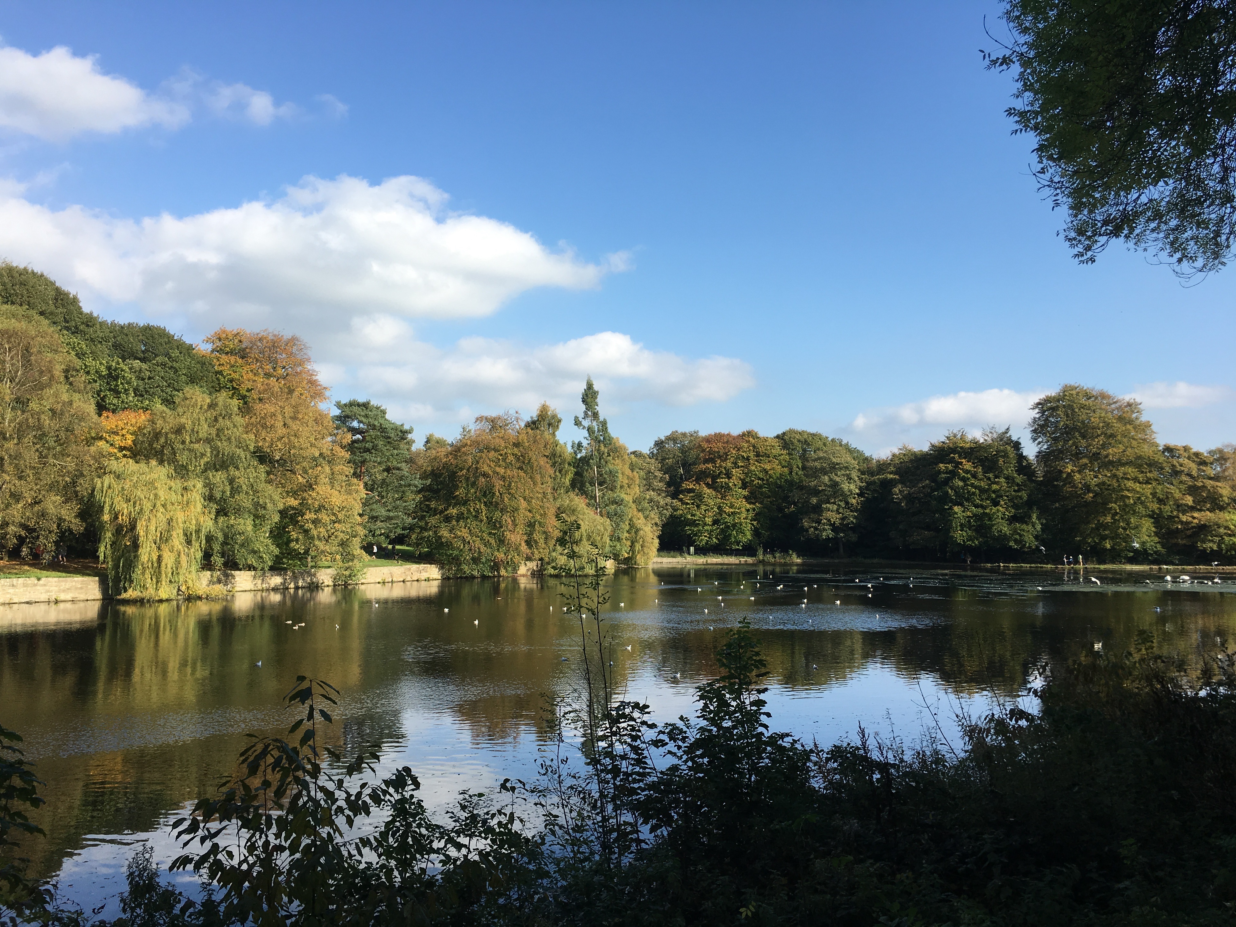 Student Ryan's image of Roundhay Park