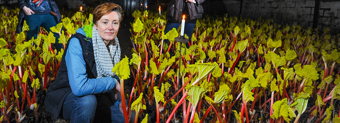 Yorkshire hero: the rhubarb