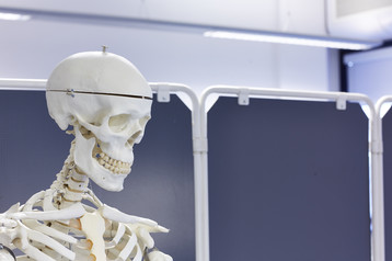 musculoskeletal research - skeleton