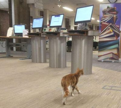 Library cats on World Cat Day